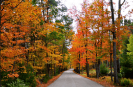 Fall Driving Route