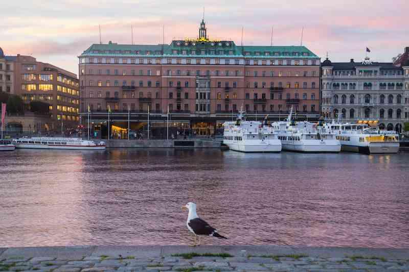 stockholm-pigeon