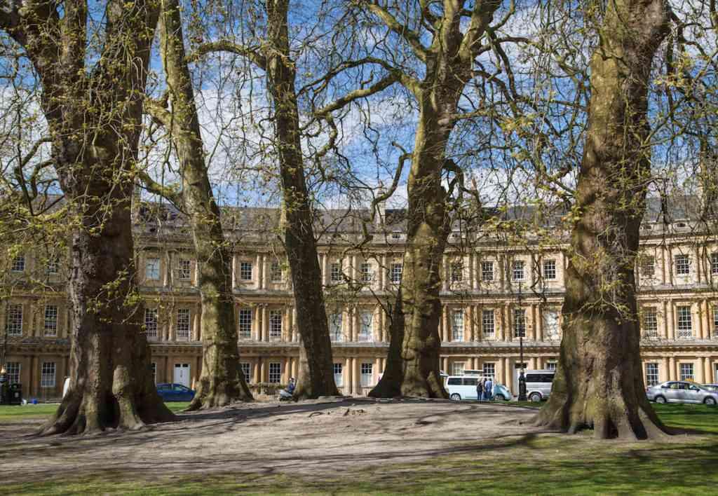 Bath Trees Circus