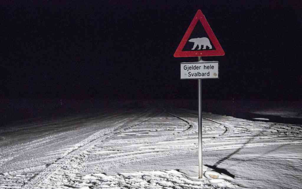 Polar Bear Warning Sign Svalbard