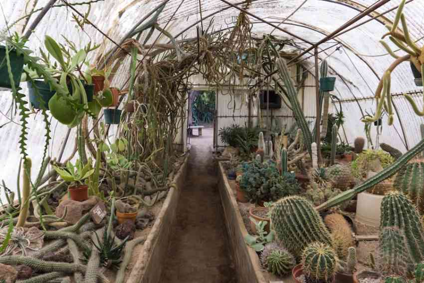 7 surprising perks of a palm springs getaway you may not - Moorten botanical garden and cactarium ...