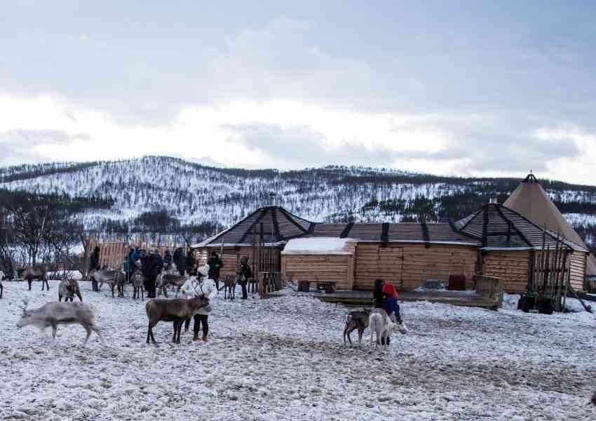 Sami reindeer farm