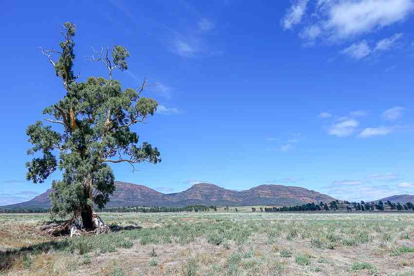 Explore Flinders Ranges in Australia