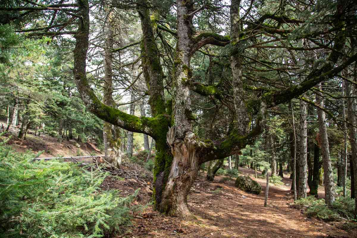 A giant tree in the forest