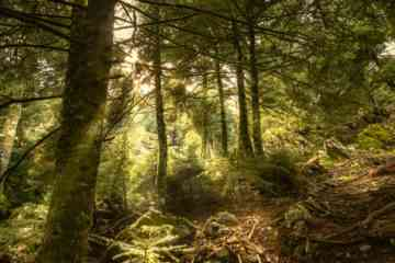 Light in the forest of Parnitha