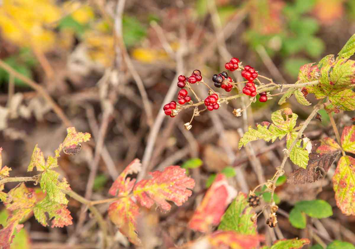 red berries in the forest